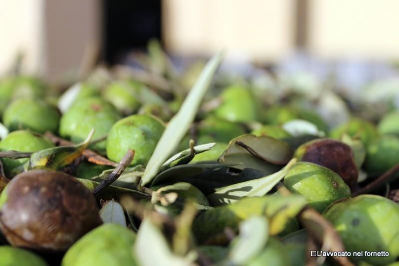 Le olive al frantoio